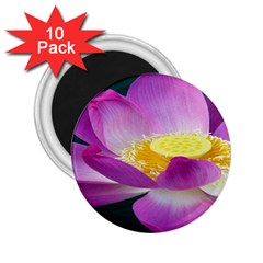 Pink Lotus Flower 2 25  Magnets (10 Pack)