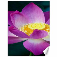 Pink Lotus Flower Canvas 36  X 48