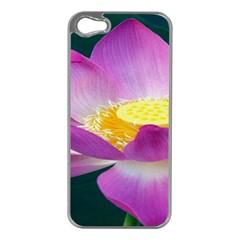 Pink Lotus Flower Apple Iphone 5 Case (silver)