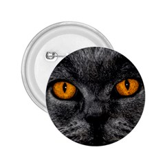 Cat Eyes Background Image Hypnosis 2 25  Buttons