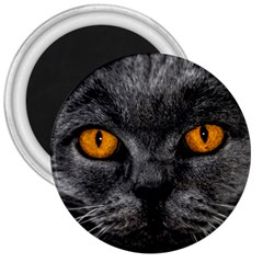Cat Eyes Background Image Hypnosis 3  Magnets by BangZart