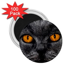 Cat Eyes Background Image Hypnosis 2 25  Magnets (100 Pack)