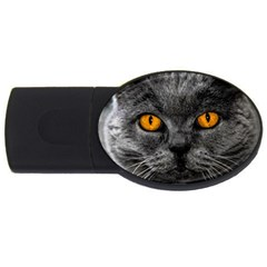 Cat Eyes Background Image Hypnosis Usb Flash Drive Oval (2 Gb) by BangZart