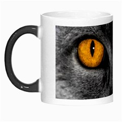 Cat Eyes Background Image Hypnosis Morph Mugs by BangZart