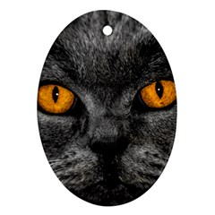 Cat Eyes Background Image Hypnosis Oval Ornament (two Sides) by BangZart