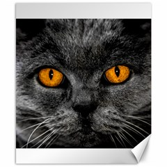 Cat Eyes Background Image Hypnosis Canvas 8  X 10  by BangZart