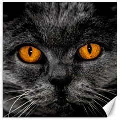Cat Eyes Background Image Hypnosis Canvas 20  X 20
