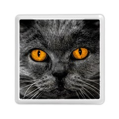 Cat Eyes Background Image Hypnosis Memory Card Reader (square)  by BangZart