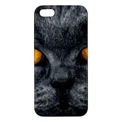 Cat Eyes Background Image Hypnosis Apple Iphone 5 Premium Hardshell Case by BangZart