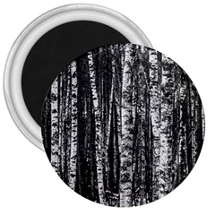 Birch Forest Trees Wood Natural 3  Magnets by BangZart