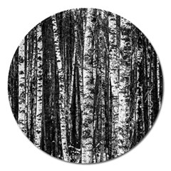 Birch Forest Trees Wood Natural Magnet 5  (round) by BangZart