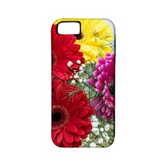 Flowers Gerbera Floral Spring Apple Iphone 5 Classic Hardshell Case (pc+silicone)