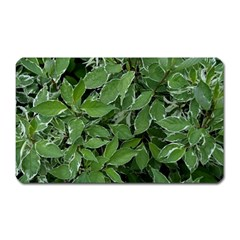 Texture Leaves Light Sun Green Magnet (rectangular) by BangZart