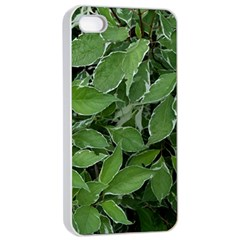 Texture Leaves Light Sun Green Apple Iphone 4/4s Seamless Case (white) by BangZart