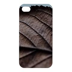 Leaf Veins Nerves Macro Closeup Apple Iphone 4/4s Premium Hardshell Case by BangZart