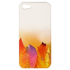 Autumn Leaves Colorful Fall Foliage Apple Iphone 5 Hardshell Case by BangZart