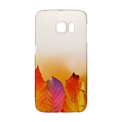 Autumn Leaves Colorful Fall Foliage Galaxy S6 Edge by BangZart