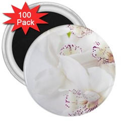 Orchids Flowers White Background 3  Magnets (100 Pack)