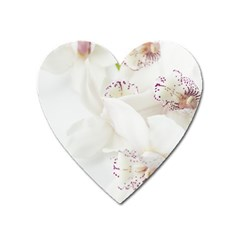 Orchids Flowers White Background Heart Magnet by BangZart