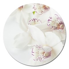 Orchids Flowers White Background Magnet 5  (round) by BangZart