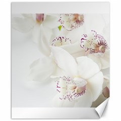 Orchids Flowers White Background Canvas 8  X 10  by BangZart