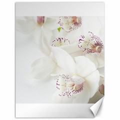 Orchids Flowers White Background Canvas 12  X 16   by BangZart