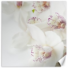 Orchids Flowers White Background Canvas 16  X 16   by BangZart