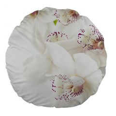 Orchids Flowers White Background Large 18  Premium Flano Round Cushions by BangZart