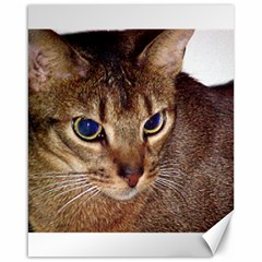 Abyssinian 2 Canvas 16  x 20