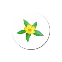 Yellow Flower With Leaves Photo Magnet 3  (round) by dflcprints