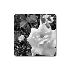 White Rose Black Back Ground Greenery ! Square Magnet by CreatedByMeVictoriaB