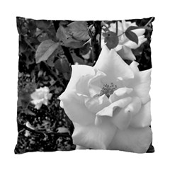 White Rose Black Back Ground Greenery ! Standard Cushion Case (two Sides) by CreatedByMeVictoriaB
