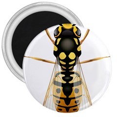 Wasp 3  Magnets