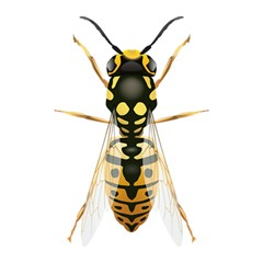 Wasp Shower Curtain 48  X 72  (small)