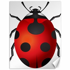 Ladybug Insects Canvas 36  X 48