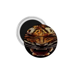 Tiger Face 1 75  Magnets by BangZart