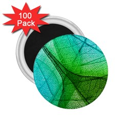 Sunlight Filtering Through Transparent Leaves Green Blue 2 25  Magnets (100 Pack)