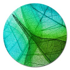 Sunlight Filtering Through Transparent Leaves Green Blue Magnet 5  (round)