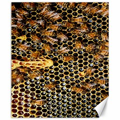 Queen Cup Honeycomb Honey Bee Canvas 8  X 10