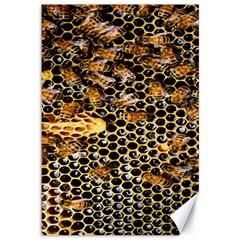 Queen Cup Honeycomb Honey Bee Canvas 12  X 18