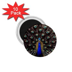 Peacock 1 75  Magnets (10 Pack)  by BangZart
