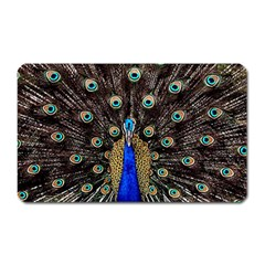 Peacock Magnet (rectangular) by BangZart