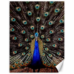 Peacock Canvas 12  X 16   by BangZart