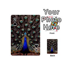 Peacock Playing Cards 54 (mini)  by BangZart