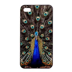 Peacock Apple Iphone 4/4s Seamless Case (black) by BangZart
