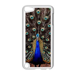 Peacock Apple Ipod Touch 5 Case (white) by BangZart