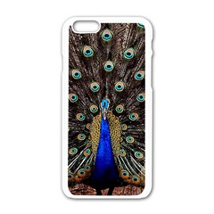 Peacock Apple Iphone 6/6s White Enamel Case by BangZart