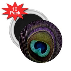 Peacock Feather 2 25  Magnets (10 Pack)  by BangZart