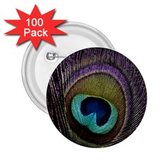 Peacock Feather 2 25  Buttons (100 Pack)