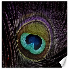 Peacock Feather Canvas 12  X 12   by BangZart
